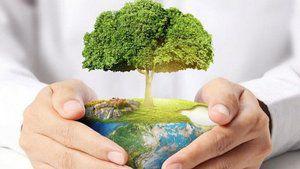 Медведев поручил подготовить курс экологического образования для школьников