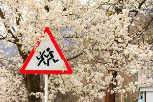 В России стартовала социальная акция «Внимание на дорогу»
